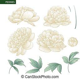 Set of peony flowers elements.