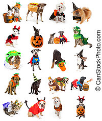 Set of Pets in Halloween Costumes