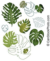set of philodendron leaves