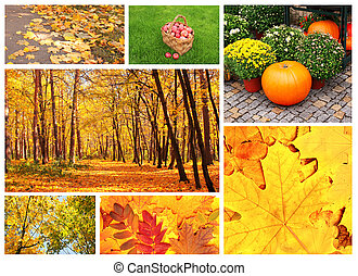 Set of photos with autumn leaves and apples