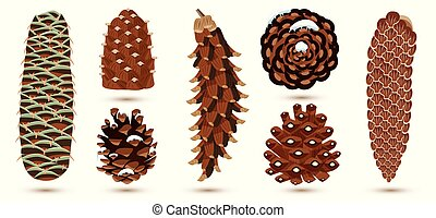 Set of Pine and Spruce Cones Isolated on White. Botanical ...