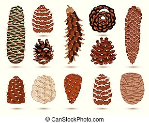 Set of Pine and Spruce Cones Isolated on White. Vector ...