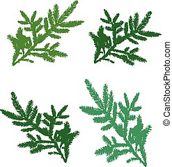 Set of pine branches for design, silhouette on white background,