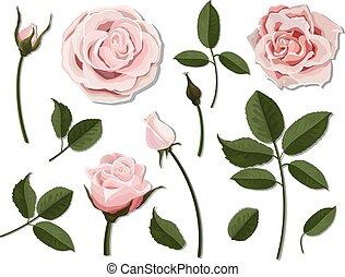 Set of pink rose flower parts