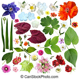 Set of plant elements - flowers and leaves. On a white...