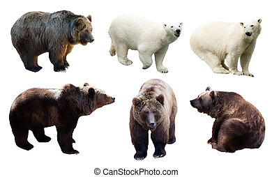 Set of polar and brown bears over white background