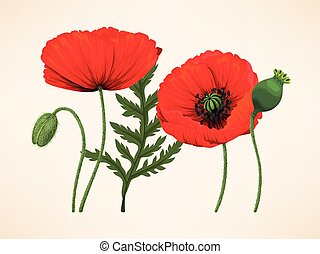Set of poppies