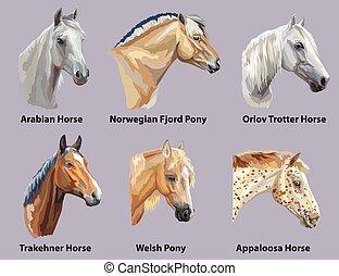 Set of portraits of horses breeds - Set of portraits of...