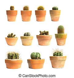 Set of pot cactus plant isolated on white background