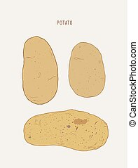 set of pototoes , hand drawn sketch vector.