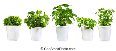 set of potted green plants isolated on white background