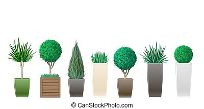 Set of potted plants - Set of decorative plants in pots of...