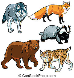 set of predators, beasts of european forest ,wild animals ...