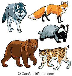 set of predators, beasts of european forest ,wild animals...