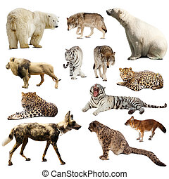 Set of predatory mammals over white - Set of predatory...