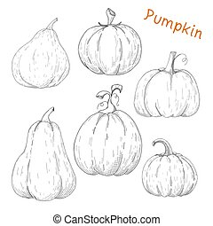 Set of pumpkins isolated on white background. Vector.