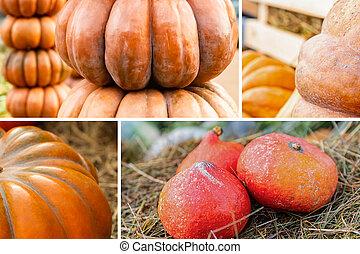 set of pumpkins orange mini in the hay, tower of vegetables pattern autumn