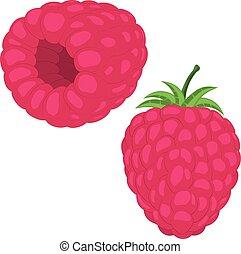 Set of raspberry. Hand drawn isolated raspberry elements.