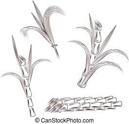 Set of raw sugar cane plant stalks. Hand draw cane leaves background.