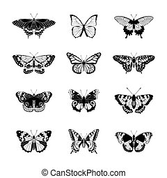Set of realistc butterfly - Set of butterflies. Butterfly...