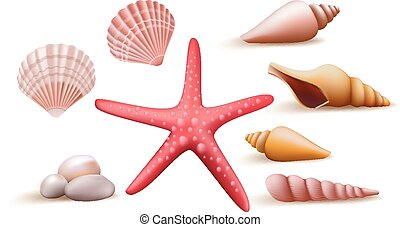 Set of Realistic Colorful Sea Shells and Stones Elements and...