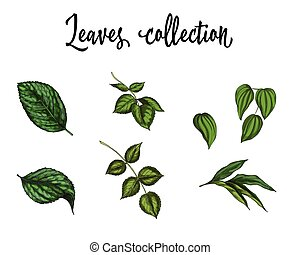 Set of realistic green leaves collection isolated on white background. Vector Illustration