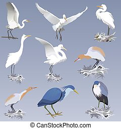 set of realistic herons of different species in different...