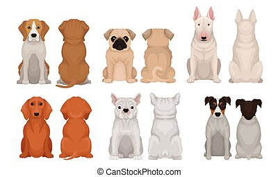 Set of realistic images of thoroughbred dogs. Vector illustration.