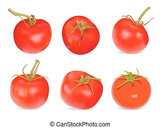 Set of Realistic red Tomatos. Vector illustration. Isolated on white background