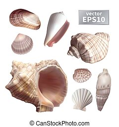 Set of realistic seashells - Set of realistic different...