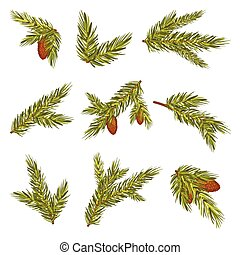 Set Of Realistic Spruce Branches With Cones Vector Illustration