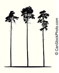 Set of realistic vector silhouettes of coniferous trees - isolated