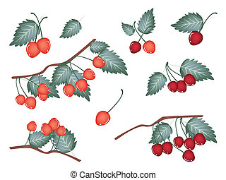 Set of Red Cherries on White Background