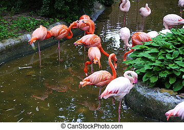 Set of red flamingo