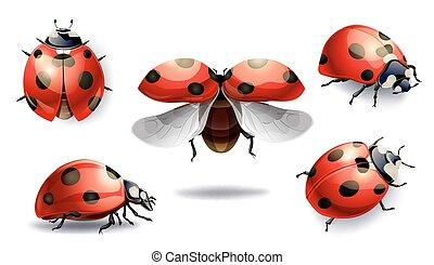 set of red ladybug isolated on white. vector illustration