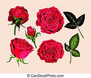 Set of red rose