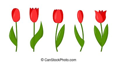 Set of red tulips isolated on white background.