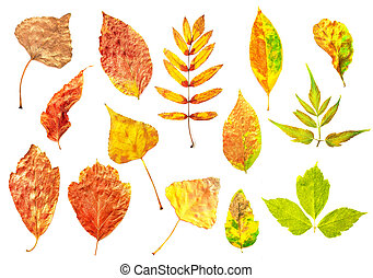 Set of red, yellow, green autumn leaves