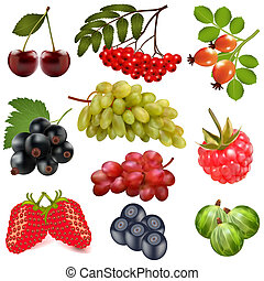 set of ripe berries on a white background