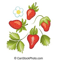 Set of ripe sweet strawberry and flower with leaves. Vector.