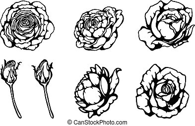 Set of rose vector by hand drawing.