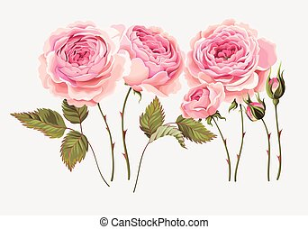 Set of roses - Vector set of gorgeous vintage roses, buds...