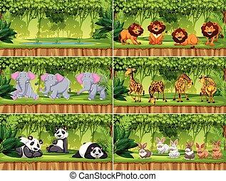 Set of scenes with animals