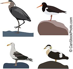 Set of sea birds