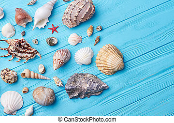 Set of sea shells close up.