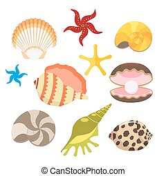 Set of sea shells, oysters with pearls and sea stars, snails. Vector, illustration in flat style isolated on white background EPS10.