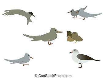 Set of Seabird seagull. Isolated on White background. Vector Ill