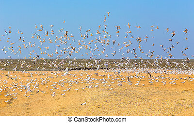 Set of seagulls flying over the sea