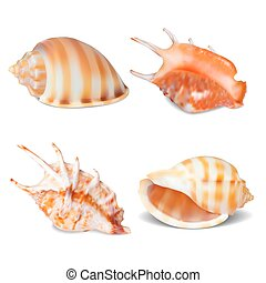 Set of Seashell, isolated on white. Vector illustration