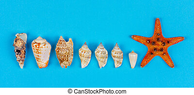 set of seashells and starfish on blue background top view, flat lay